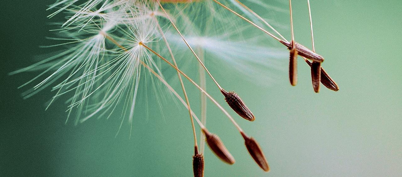 Es tut sich was: Go-Mindful wächst – wachst mit!